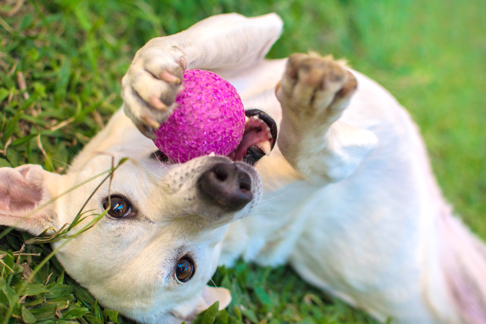 Educar a tu perro para vivir en casa para vivir mejor