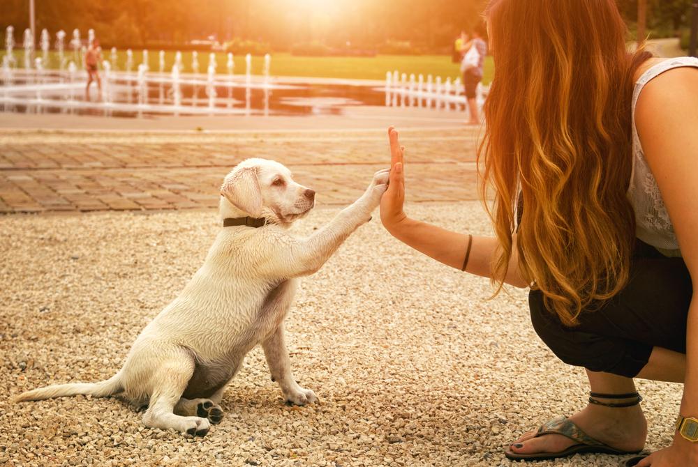 Educar a tu perro para vivir en casa se puede hacer