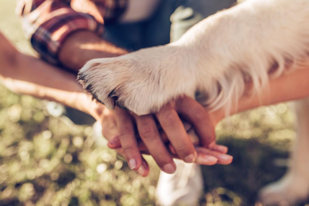 Educar a tu perro para vivir en casa